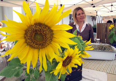 Sunflowers at the Delray GreenMarket